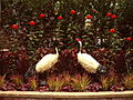 Phipps Conservatory Palm House, Japanese Red-Crowned Crane Topiary, 2015-10-24, 01.jpg