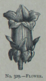 Picture Natural History - No 329 - Flower.png