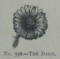 Picture Natural History - No 350 - The Daisy.png