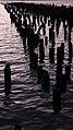 Pier with no build - panoramio.jpg