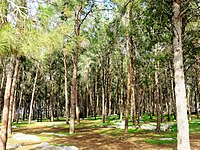 PikiWiki Israel 53239 winter landscape in the forest.jpg
