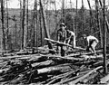 Piling up poles, Camp Roosevelt, George Washington National Forest, Virginia (3226943004).jpg