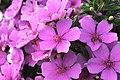 Pink (156455647).jpeg