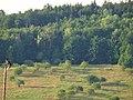 Pirna, Germany - panoramio (513).jpg