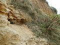 Plage fossile du Pléistocène récent près de Saint-Florent (Haute-Corse, France).JPG