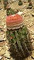Planta Cactus.jpg