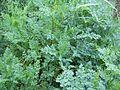 PlanteA-1.jpg