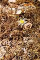 Plants-Sicily-bjs-5.jpg