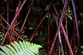 Plants Around the Lava Tube (24448914106).jpg