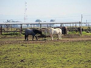 Pleasant Grove, California - Image: Pleasant Grove CA 721 panoramio