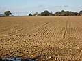 Ploughed field near East Tanfield - geograph.org.uk - 274607.jpg