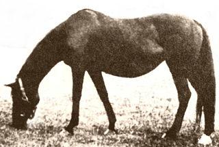 Plucky Liege British-bred Thoroughbred racehorse