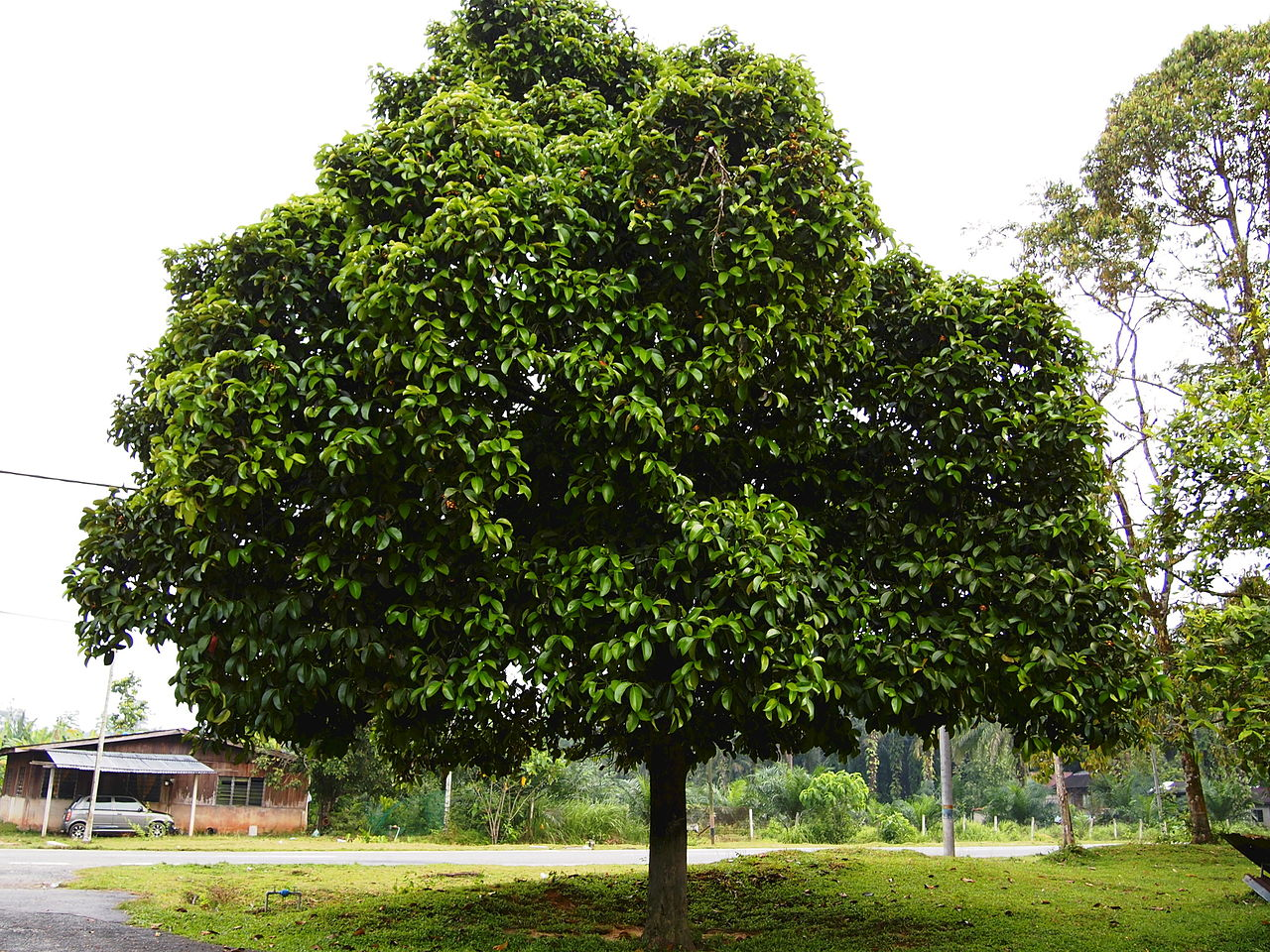 Best Nut Tree For Nature