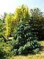 Poltava Botanical garden (153).jpg