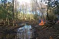 Pond, Longdown Inclosure, New Forest National Park - geograph.org.uk - 1077061.jpg