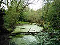 Pond in highfield country park.jpg