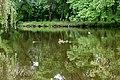Pond with ducks in oak grove.jpg