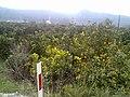 Portakal Agaclari (Aralik 2009) - panoramio.jpg