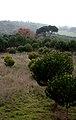 Portugal (10371341805).jpg