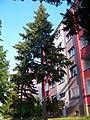 Práčská 85, strom.jpg