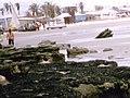 Praia de Tibau - RN - panoramio - Luiz Nazareno de Sou… (6).jpg