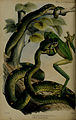 Proceedings of the Zoological Society of London (Plate Reptilia XXXII) (6006213918).jpg
