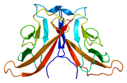 Protein CDH11 PDB 2a4c.png
