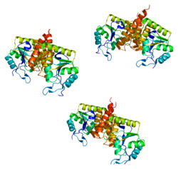 Protein CDKN3 PDB 1fpz.png
