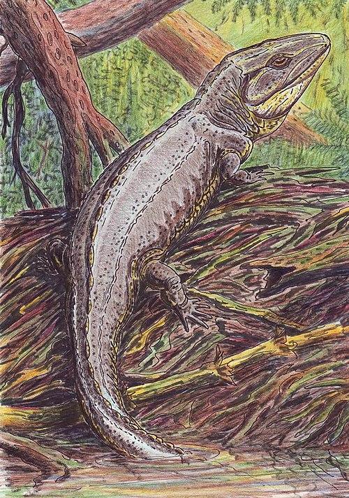 内射粉嫩蝎鱼_包括三目: 鱼被目 ichthyostegalia 断椎目 temnospondyli  离椎亚目