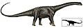 Puertasaurus copia.jpg