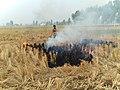 Punjab Straw Firing.jpg