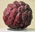 Purple Sugar Apple.jpg
