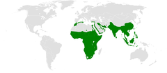Pycnonotus distribution map.png