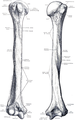 Quain's elements of anatomy (1891) - Vol2 Part1- Fig 090-091.png
