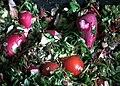 Radieschen Tomaten Feldsalat Futter Schafe.JPG