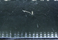 Radium hands in a cloud chamber (electrons and alpha particles).png