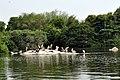 Ranganathittu Bird Sanctuary 18.jpg
