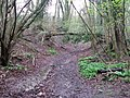 Recently fallen tree - geograph.org.uk - 1247726.jpg