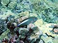 Reef0623 - Flickr - NOAA Photo Library.jpg
