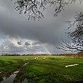 Regenboog in wieland met schapen.jpg