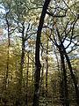 Rezerwat przyrody Dęby w Meszczach 201012 11.57.jpg