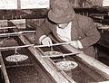 Ribogojnica v Bukovju pri Frankolovem 1960 (2).jpg