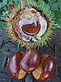 Ripe chestnuts (6537423985).jpg