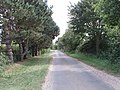 Road near Daffy Green lined with conifers - geograph.org.uk - 520777.jpg