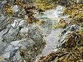 Rock pool in the wave cut platform - geograph.org.uk - 1400874.jpg