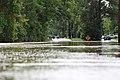 Roman Forest Flood - 4-18-16 (26486278196).jpg