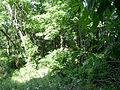 Rowlandtown Mound HRoe 2003 02.jpg