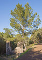 Ruins of Mount Saint-Loup, Agde 02.jpg