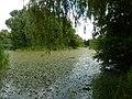 Sás Lake.jpg