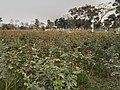 Sadullapur Flower Garden in 2020.03.jpg
